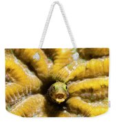 Close-up Spinyhead Blenny Weekender Tote Bag