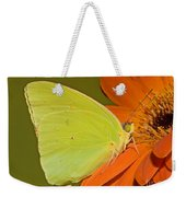 Cloudless Sulphur Butterfly Weekender Tote Bag