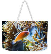 Clown Fish - Anemonefish Swimming Along A Large Anemone Amphiprion Weekender Tote Bag