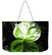 Coffee Plant The Shiny Thick Green Butterfly Look Plant Gives The Great Promise Of A Cash Crop To Th Weekender Tote Bag