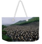 Colony Of Royal Penguin Eudyptes Weekender Tote Bag