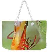 Coming Of Age - Large Milkweed Bug - Oncopeltus Fasciatus Weekender Tote Bag