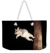 Common Brush-tailed Possum Weekender Tote Bag
