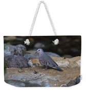 Common Ground-dove Weekender Tote Bag