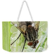 Common House Fly 0.9x Weekender Tote Bag