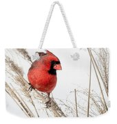 Common Northern Cardinal Square Weekender Tote Bag