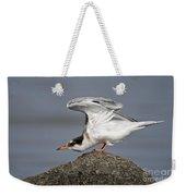 Common Tern Pictures 67 Weekender Tote Bag