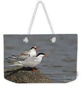Common Tern Pictures 76 Weekender Tote Bag