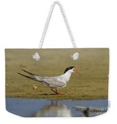 Common Tern Sterna Hirundo Weekender Tote Bag by Eyal Bartov
