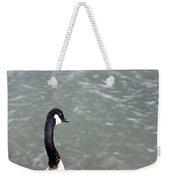 Canadian Goose Contemplating A Swim  Weekender Tote Bag