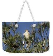 Coopers Hawk In Tree Weekender Tote Bag
