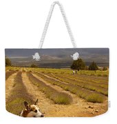 Corgi And Mt Shasta Weekender Tote Bag