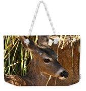 Coues White-tailed Deer - Sonora Desert Museum - Arizona Weekender Tote Bag