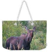 Cow Moose Portrait Weekender Tote Bag