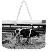 Cows Coming And Going Weekender Tote Bag