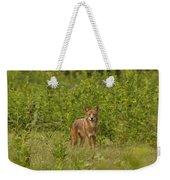 Coyote Happy Weekender Tote Bag