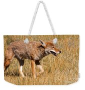 Coyote In Rocky Mountain National Park Weekender Tote Bag