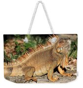 Cozumel Iguana Vacation Weekender Tote Bag