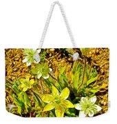 Cream Cups In Antelope Valley California Poppy Reserve-california  Weekender Tote Bag