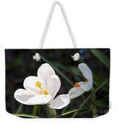 Crocus Flower Basking In Sunlight Weekender Tote Bag by Elena Elisseeva