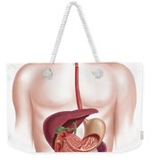 Cross Section Of Human Digestive System Weekender Tote Bag