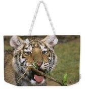 Crosseyed Siberian Tiger Cub Endangered Species Wildlife Rescue Weekender Tote Bag