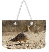 Crowned Sandgrouse Pterocles Coronatus Weekender Tote Bag