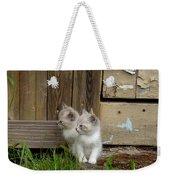 Curious Kittens Weekender Tote Bag