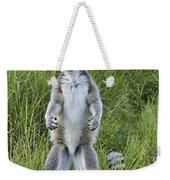 Curious Ring-tail Weekender Tote Bag