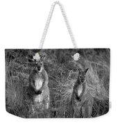 Curious Wallabies Weekender Tote Bag