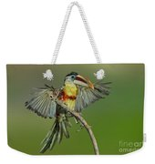 Curl-crested Aracari About To Perch Weekender Tote Bag