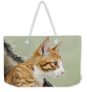 Cute Ginger Kitten On The Loookout Weekender Tote Bag
