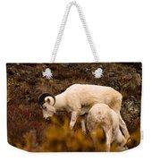 Dall Sheep Grazing Weekender Tote Bag