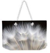 Dandelion Backlit Close Up Weekender Tote Bag