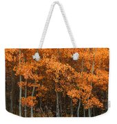 Deciduous Aspen Forest In Fall Weekender Tote Bag