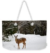 Deer On Side Of Road Weekender Tote Bag