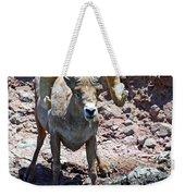 Desert Bighorn Sheep Weekender Tote Bag