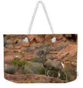 Desert Bighorn Sheep Weekender Tote Bag