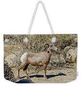 Desert Bighorn Sheep Ewe With Radio Weekender Tote Bag