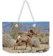 Desert Bighorn Sheep Ram At Borrego Weekender Tote Bag