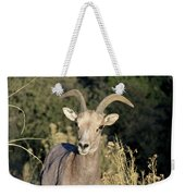 Desert Bighorn Sheep Zion National Park Weekender Tote Bag