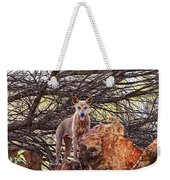 Dingo In The Wild V5 Weekender Tote Bag