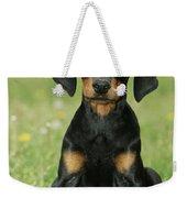 Doberman Pinscher Puppy Weekender Tote Bag