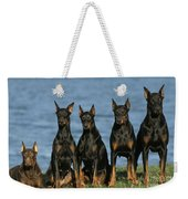Doberman Pinschers Weekender Tote Bag