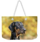 Dobermann Dog, In Autumn Weekender Tote Bag