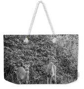 Doe A Deer Bw Weekender Tote Bag