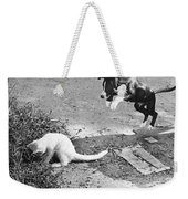 Dog Jumping On An Unsuspecting Kitten Weekender Tote Bag