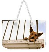 Doggie Down Time Weekender Tote Bag