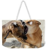 Dogs Fight On The Beach In Emerald Weekender Tote Bag