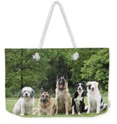 Dogs, Various Breeds In A Line Weekender Tote Bag